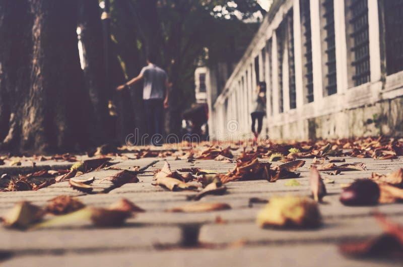 Осень в городе стоковая фотография