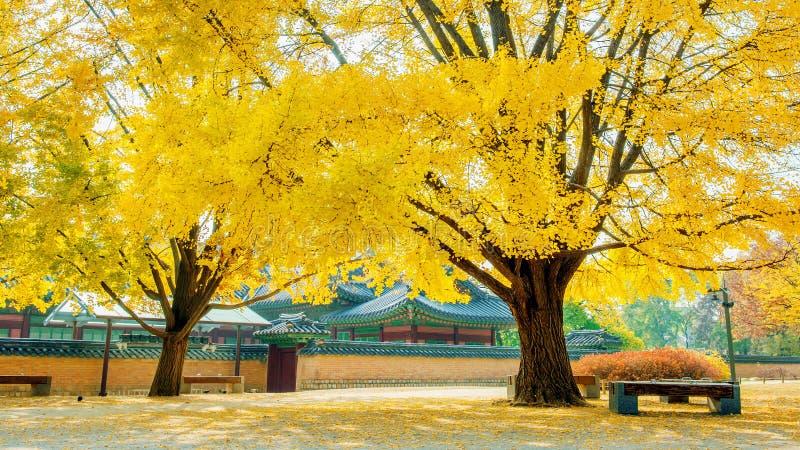 Осень в дворце Gyeongbokgung, Южной Корее стоковое изображение rf