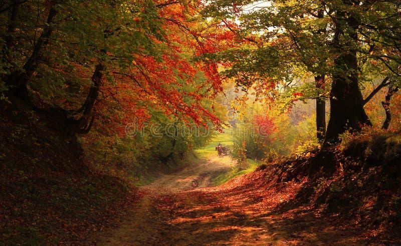 Осень в лесе стоковые фото