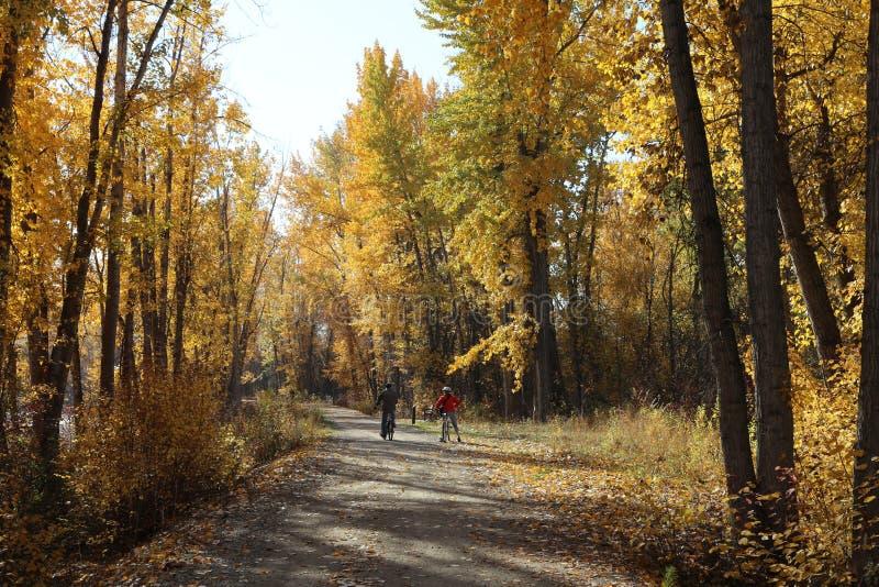 Осень в конце концов здесь! Листья изменяют к золотому цвету! стоковое изображение rf