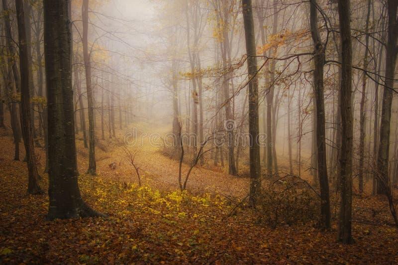 Осень в красивом лесе после дождя стоковые изображения