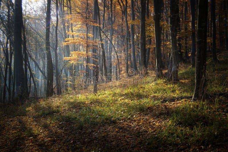 Осень в красивом заколдованном лесе с солнечным светом стоковое фото rf