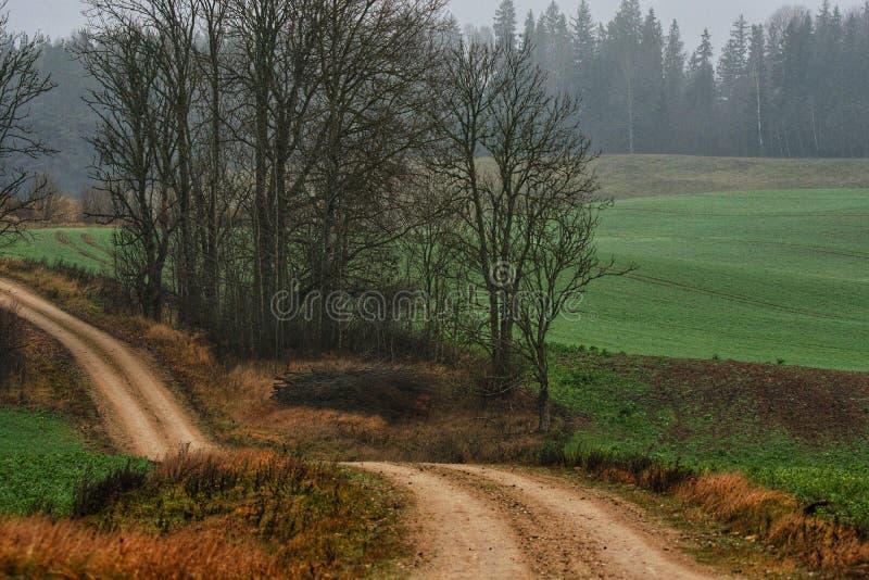 Осень в Латвии стоковые изображения rf