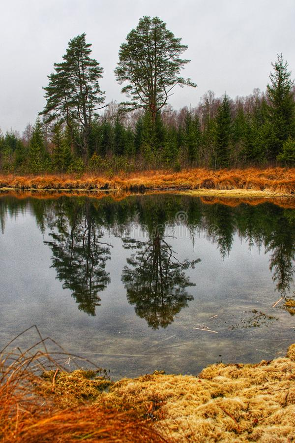 Осень в Латвии стоковое фото
