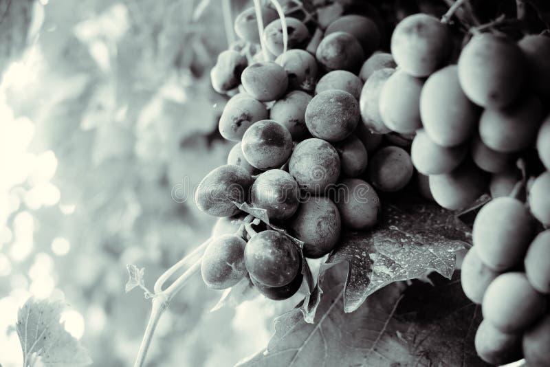 Осень в Молдавии стоковая фотография