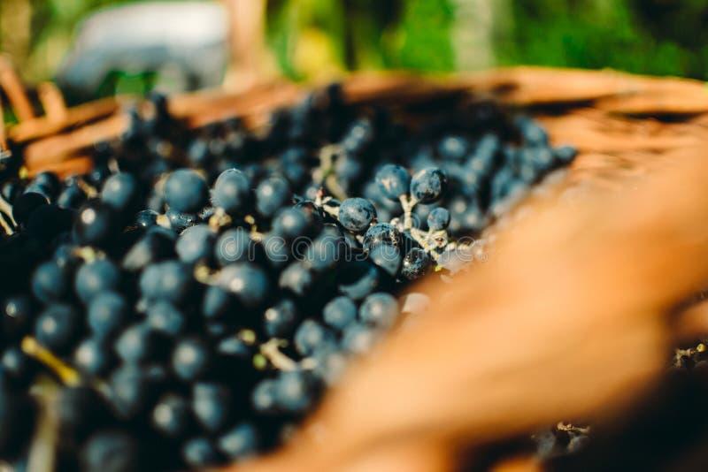 Осень в Молдавии стоковые фотографии rf