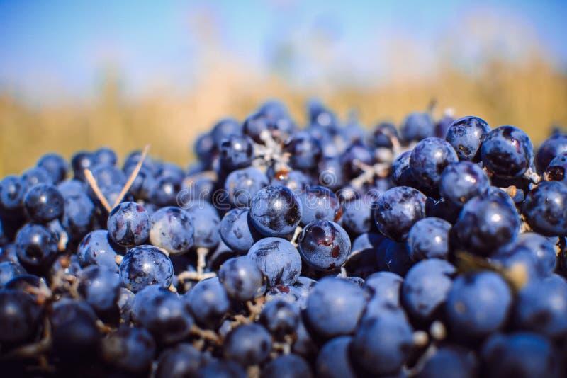 Осень в Молдавии стоковые изображения rf