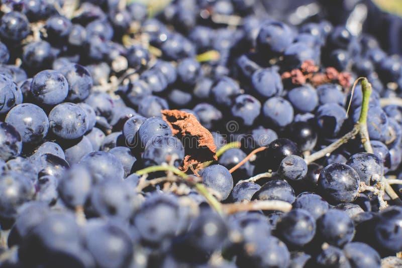 Осень в Молдавии стоковое изображение