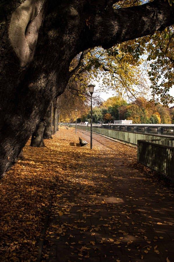 Осень в Мюнхене стоковая фотография rf