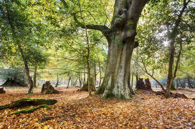 Осень в новом лесе стоковое изображение