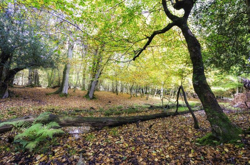 Осень в новом лесе стоковые фото