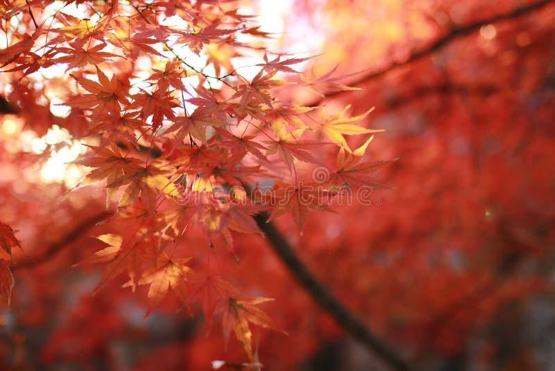 Осень в ноябрь стоковое фото rf