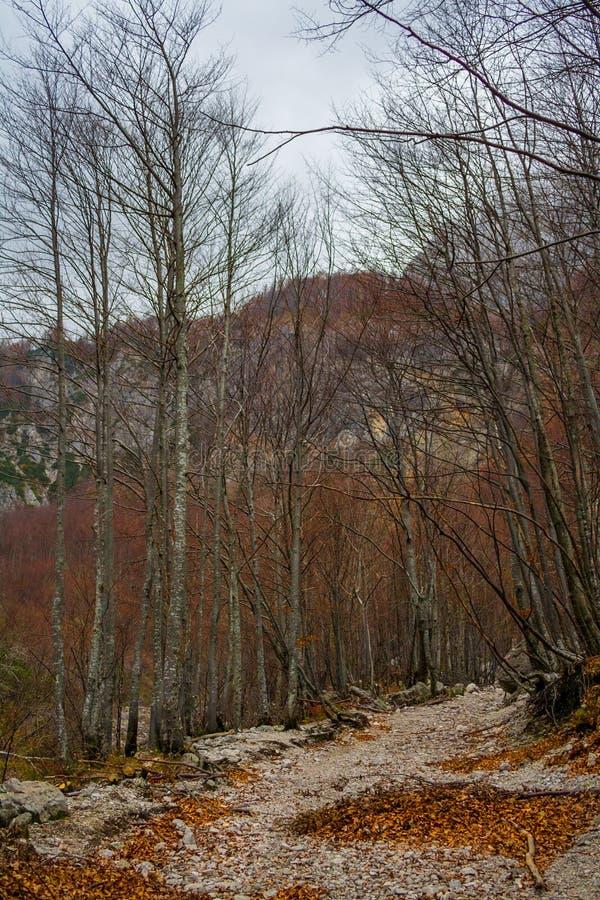 Осень в долине Logar (Logarska Dolina) стоковые фото