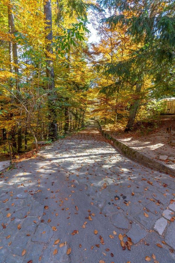 Осень в парке вокруг замка Peles в Румынии стоковые изображения rf