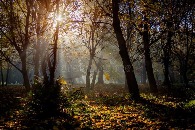 Осень в парке города Город Khmelnitsky стоковая фотография rf