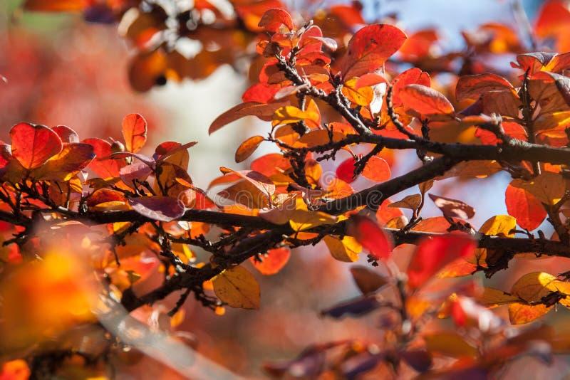 Осень в парке города Город Khmelnitsky стоковые фотографии rf