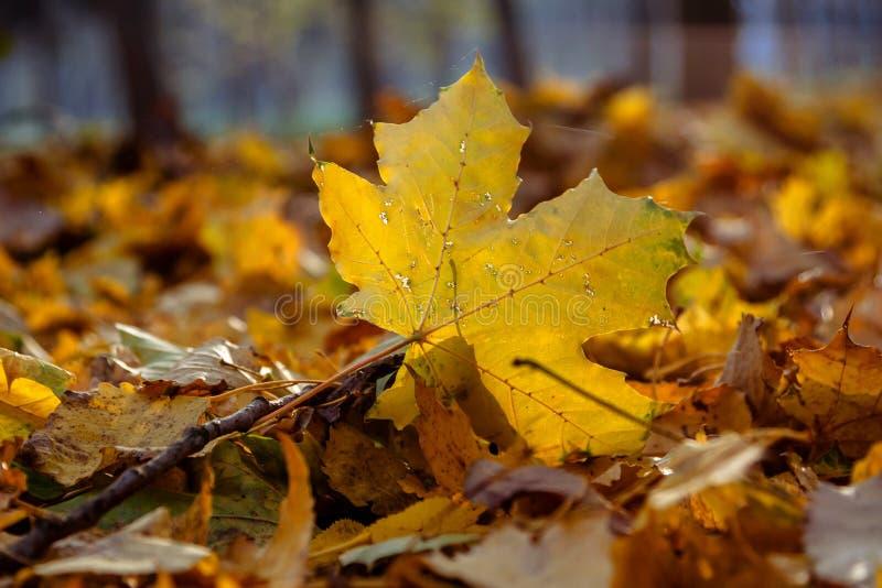 Осень в парке города Город Khmelnitsky стоковые фото