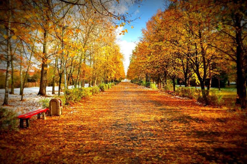 Осень в парке, первый снег стоковое фото rf