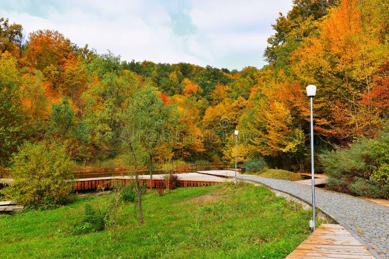 Осень в парке стоковые фотографии rf