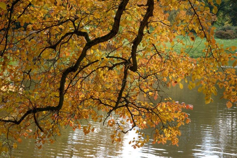 Осень в парке стоковая фотография rf