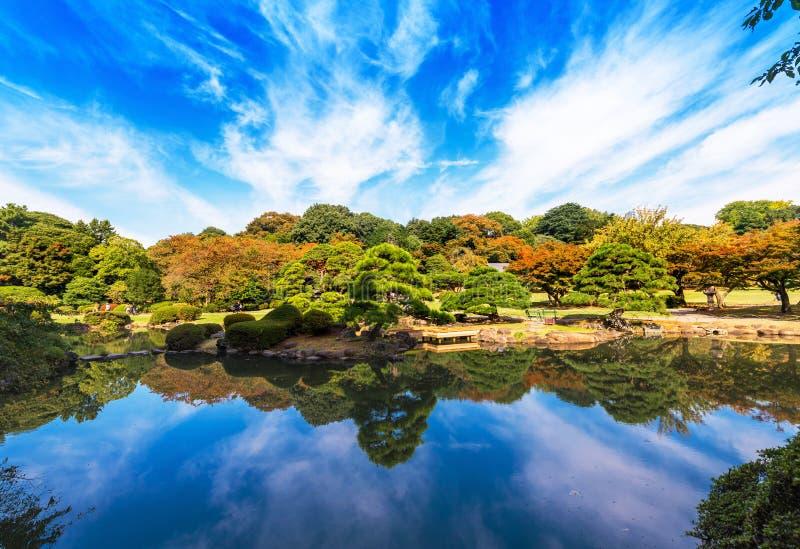 Осень в парке Shinjuku, токио, Япония Скопируйте космос для текста стоковые фотографии rf