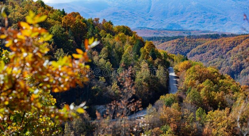 Осень в пуще стоковые фото