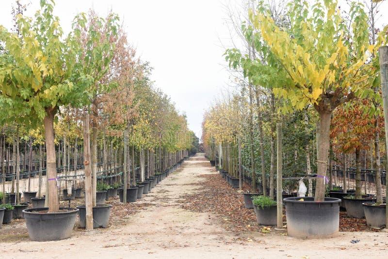 Осень в садовом центре стоковое фото rf