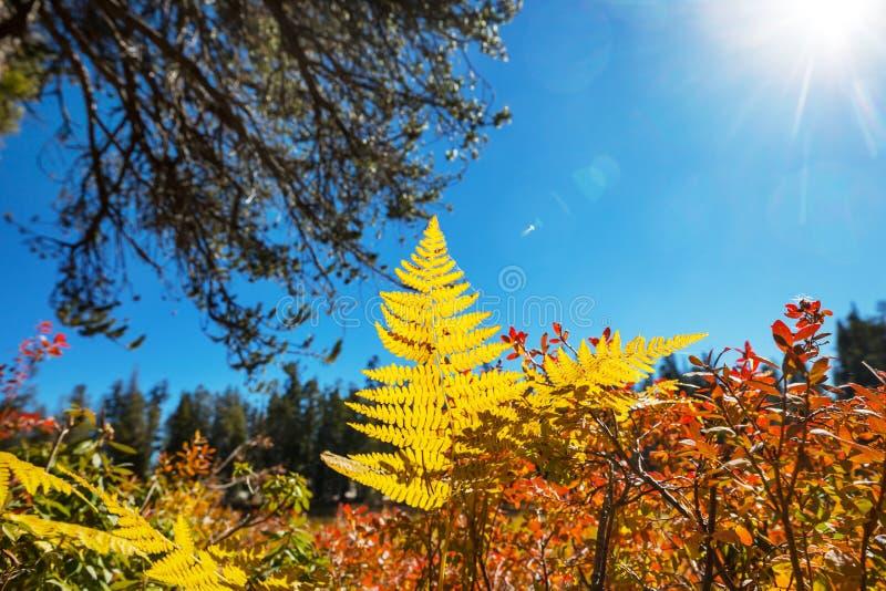 Осень в сьерра-неваде стоковые изображения