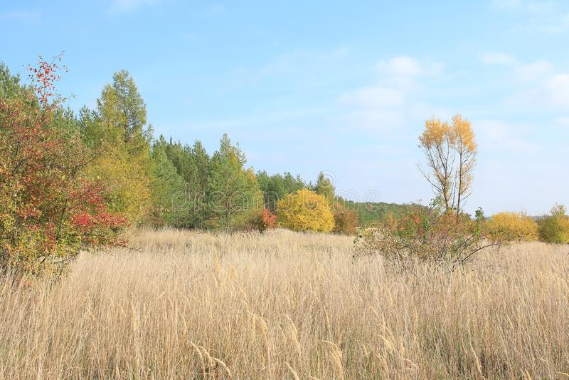 Осень в чехии стоковое фото rf