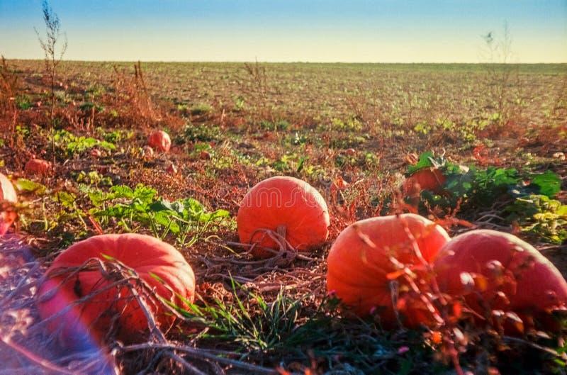 Осень в швейцарских полях и сельской местности с сетноой-аналогов фотографией - 4 стоковая фотография