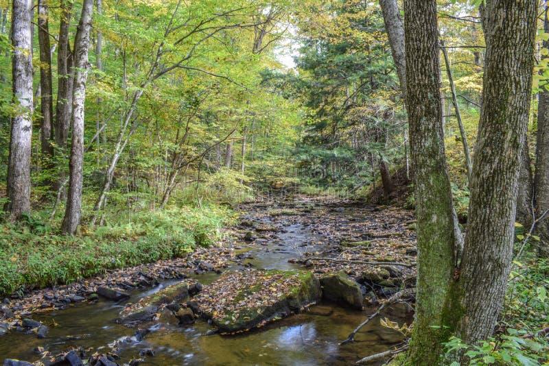 Осень в Alleghenies стоковое фото rf
