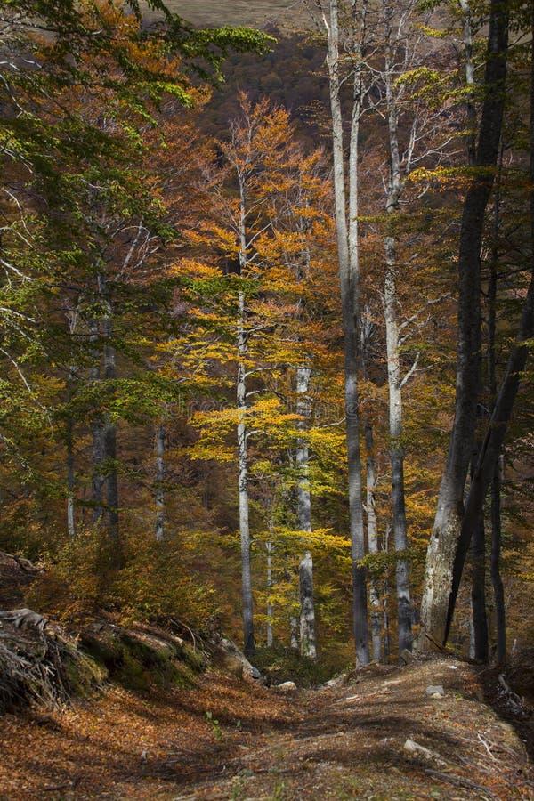 Осень в countrside в Румынии стоковая фотография