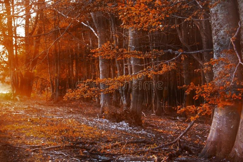 Осень в countrside в Румынии стоковое фото