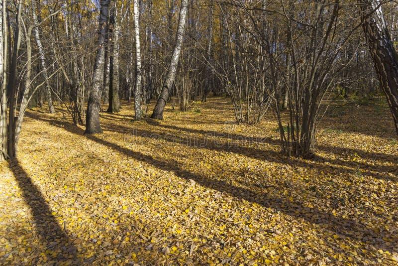 Осень в Forest Park стоковая фотография rf