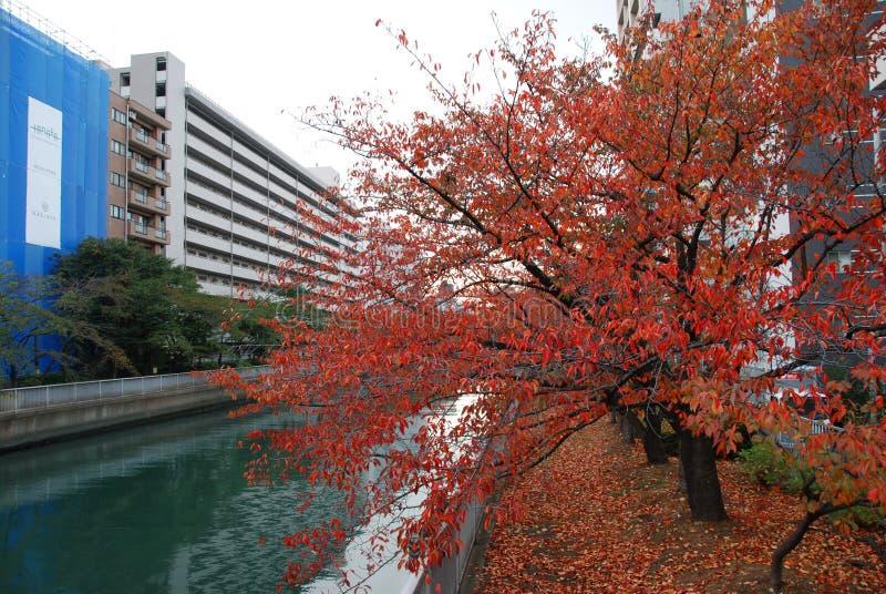 Осень в Tomioka стоковые изображения