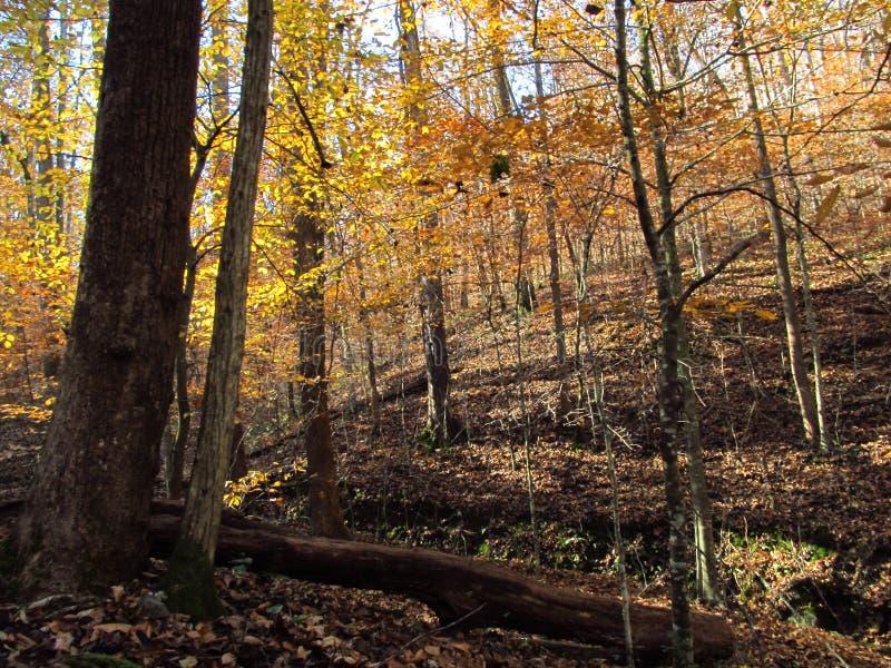 Осень в Woods5 стоковое фото