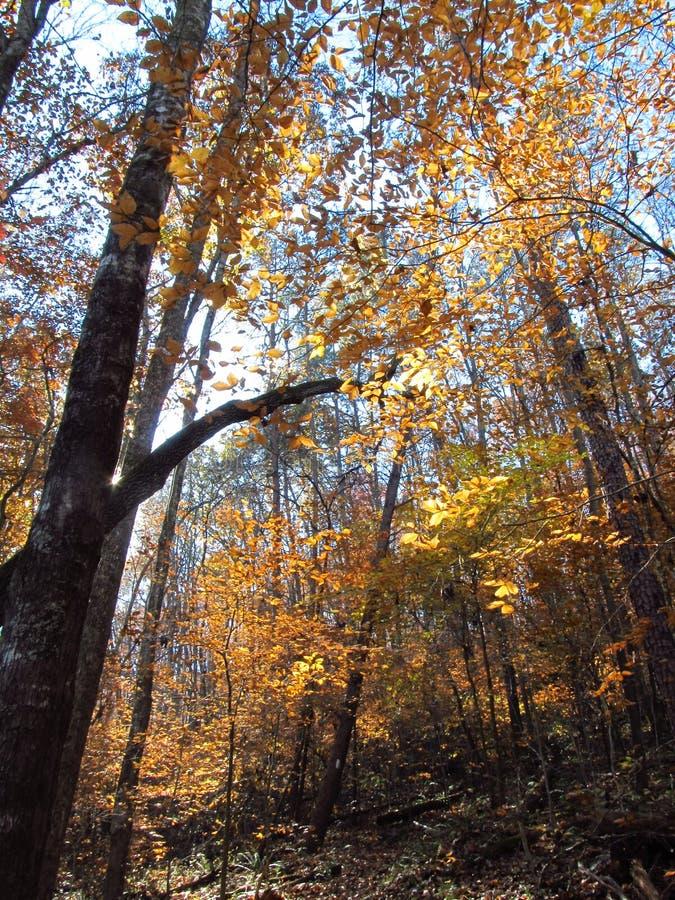 Осень в Woods8 стоковые фотографии rf