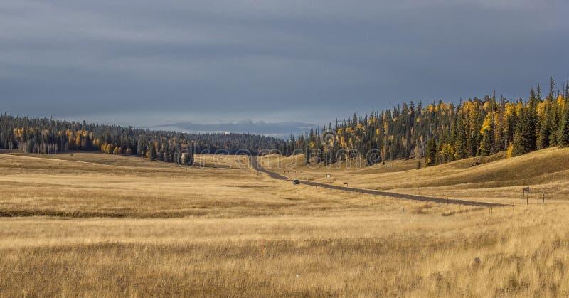 Осень гранд-каньона стоковые изображения rf