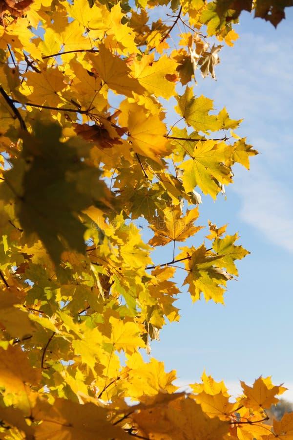 Осень 8 стоковое фото