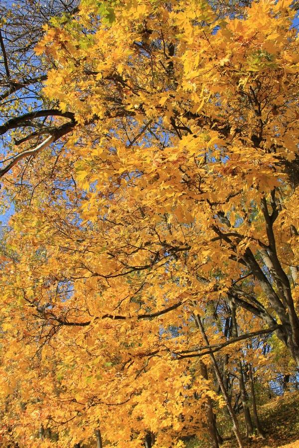 Осень 4 стоковая фотография