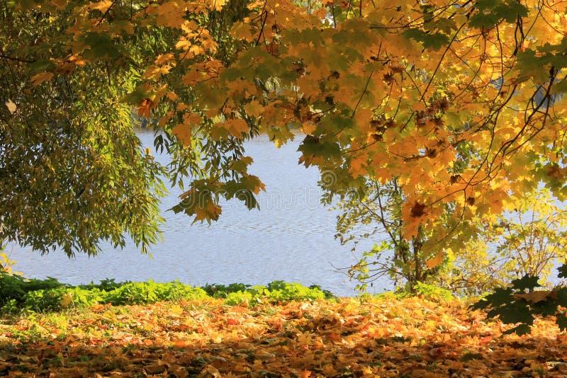 Осень 6 стоковые фотографии rf