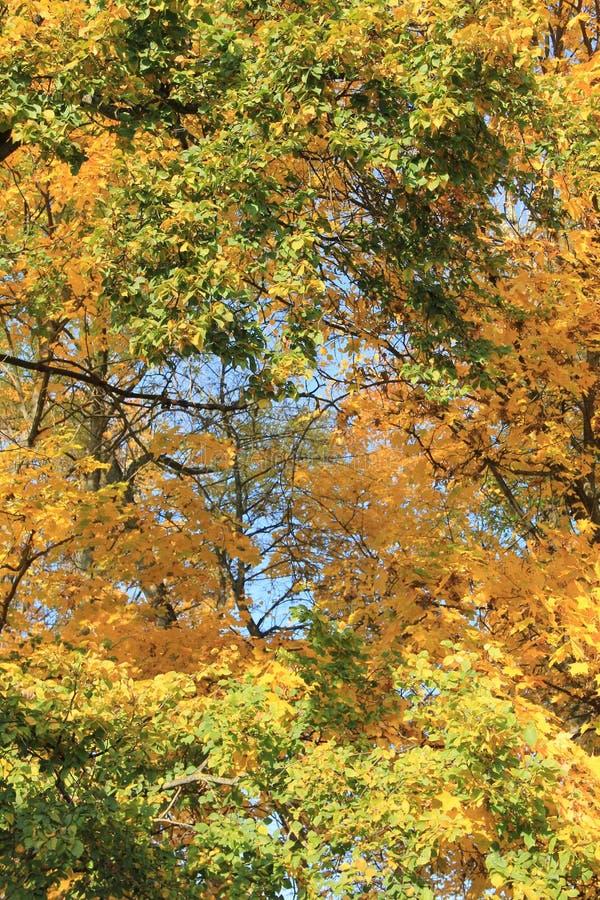 Осень 2 стоковое изображение rf