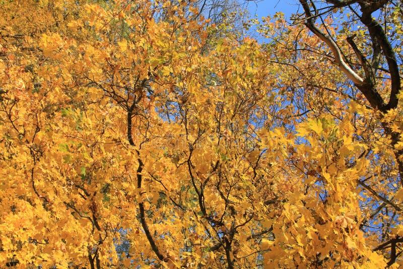 Осень 3 стоковое фото