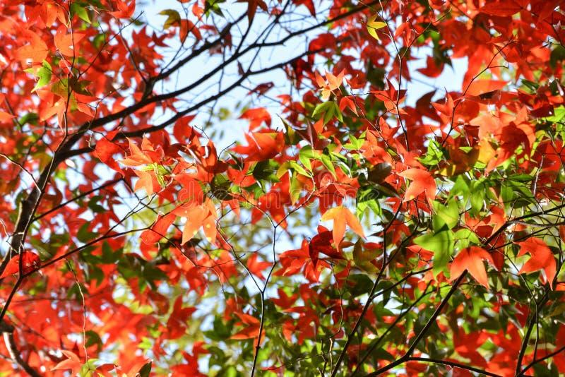 Осень дерева и яркие цвета стоковое изображение rf