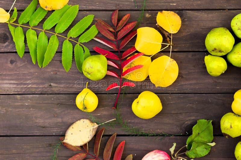 Осень Желтый цвет взгляд сверху, зеленый цвет, красные листья дерева, груши и яблоки на коричневой деревянной предпосылке стоковые изображения rf