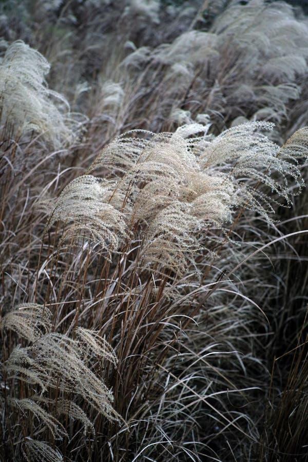 Осень желтый Reed стоковое изображение rf