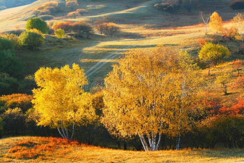 Осень запруды в Внутренней Монголии стоковое изображение
