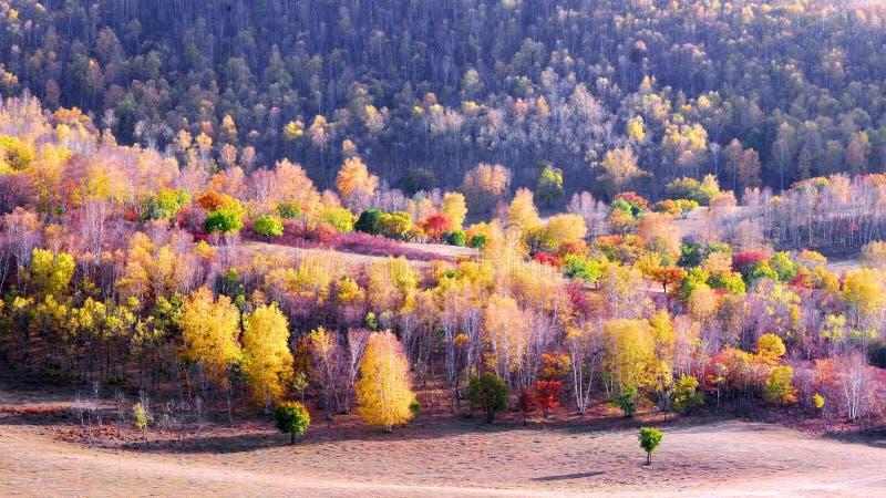 Осень запруды в Внутренней Монголии стоковые фото