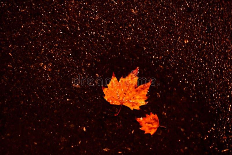 Осень здесь 2 стоковые изображения