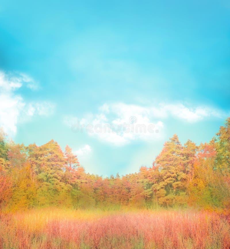 Осень золота с голубым небом Предпосылка осени с открытым пространством стоковые фотографии rf